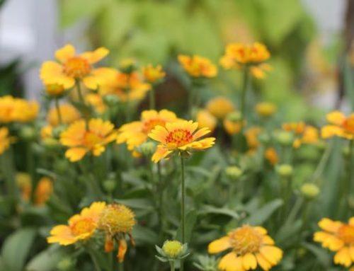 YELLOW FLOWER LOVE